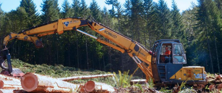 Image of logging workers